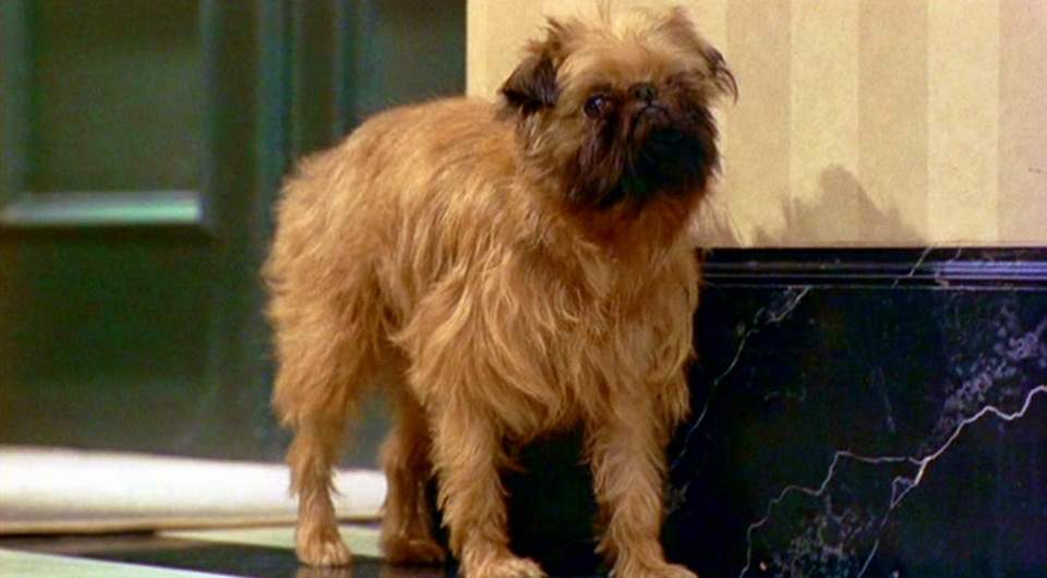 As Good As It Gets - Jill, a Brussels Griffon dog, as Verdell.